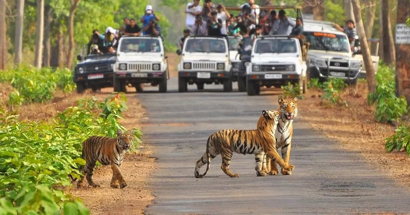 10 Things You Cannot Miss In Jim Corbett National Park